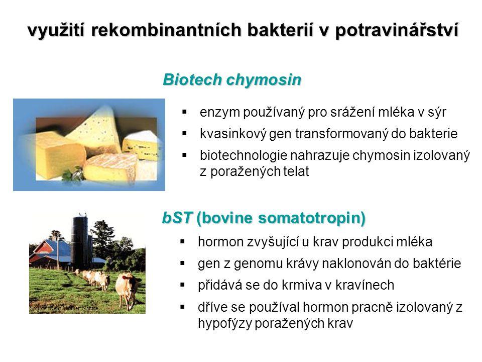 využití rekombinantních bakterií v potravinářství