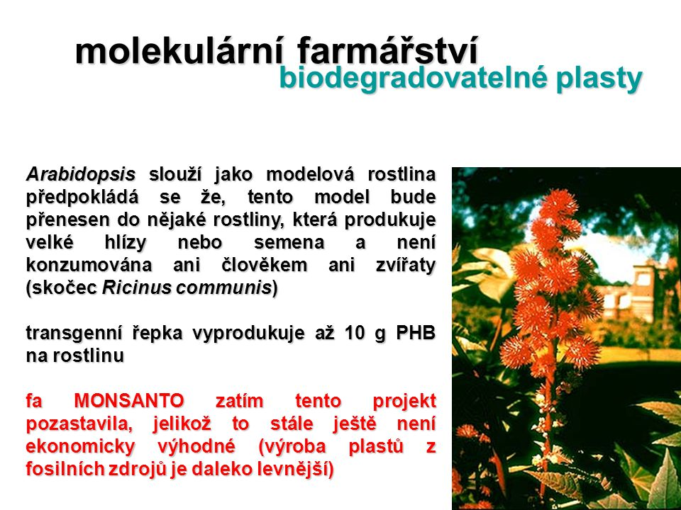 molekulární farmářství biodegradovatelné plasty