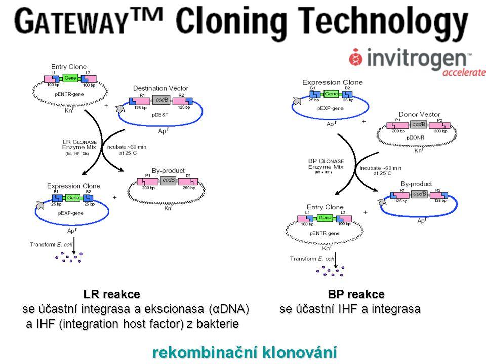 rekombinační klonování