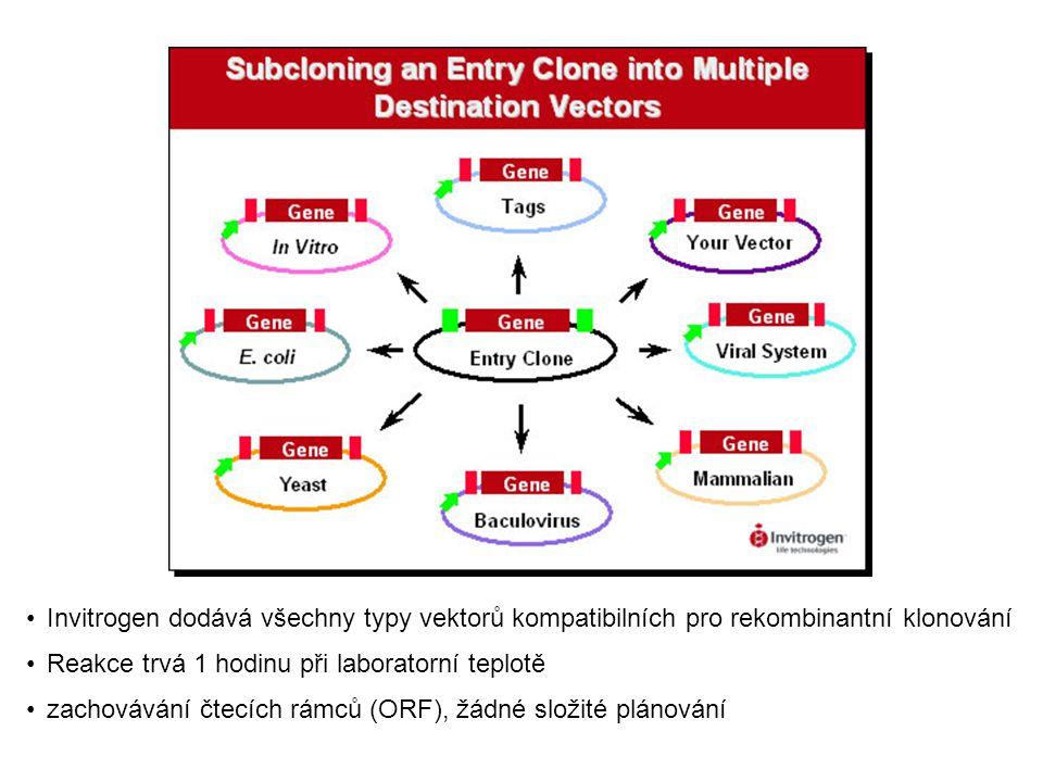 Invitrogen dodává všechny typy vektorů kompatibilních pro rekombinantní klonování