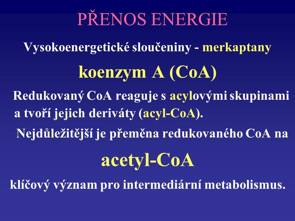 acetyl-CoA PŘENOS ENERGIE koenzym A (CoA)