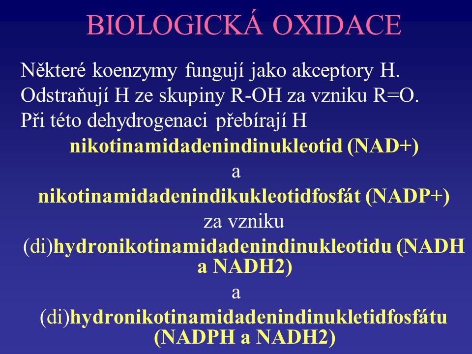 BIOLOGICKÁ OXIDACE Některé koenzymy fungují jako akceptory H.