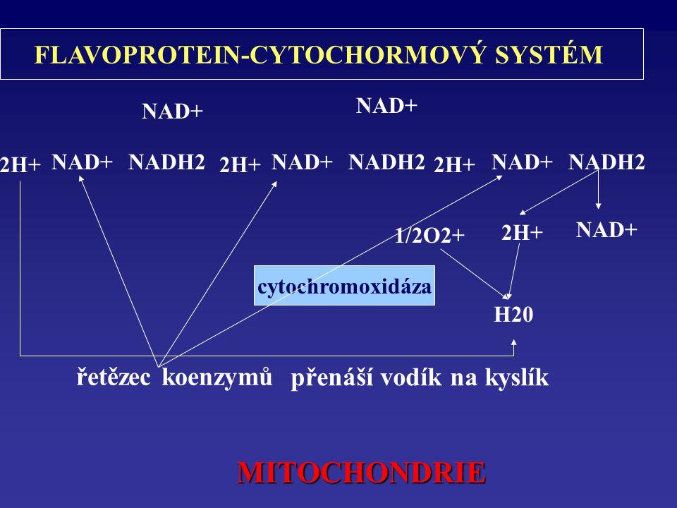 FLAVOPROTEIN-CYTOCHORMOVÝ SYSTÉM přenáší vodík na kyslík
