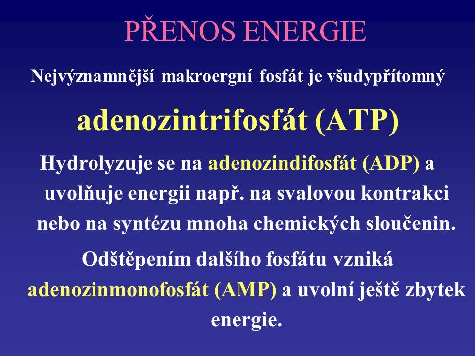 adenozintrifosfát (ATP)