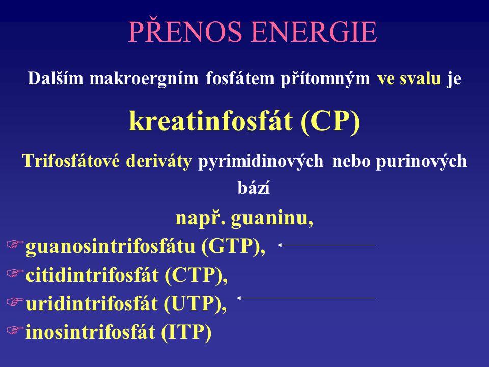 PŘENOS ENERGIE kreatinfosfát (CP) např. guaninu,