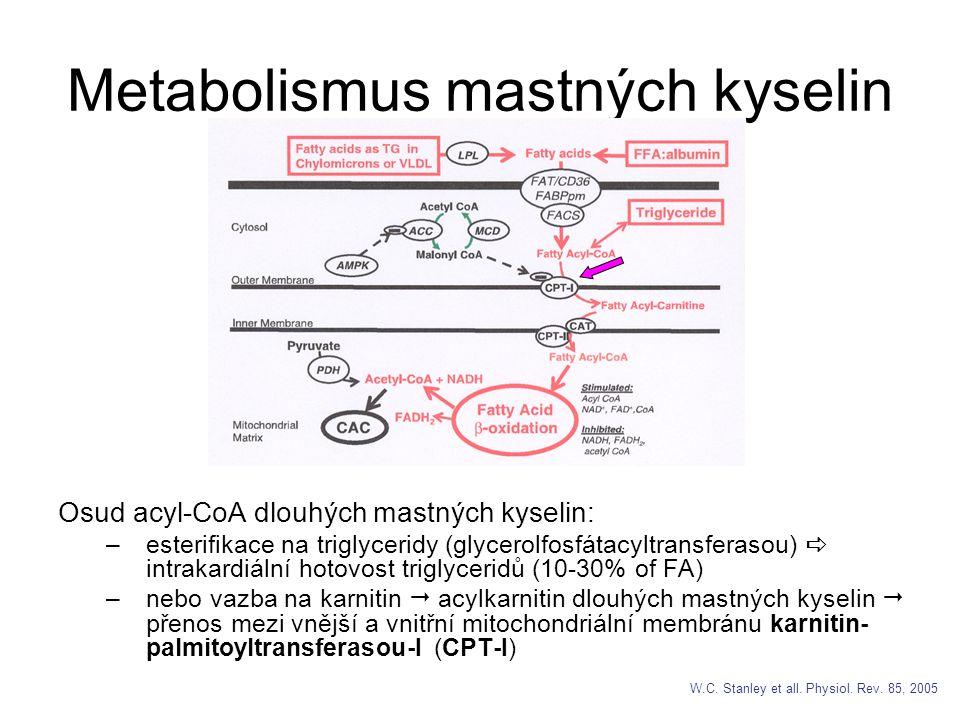 Metabolismus mastných kyselin