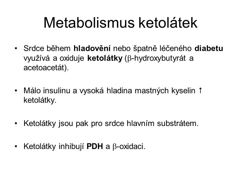 Metabolismus ketolátek