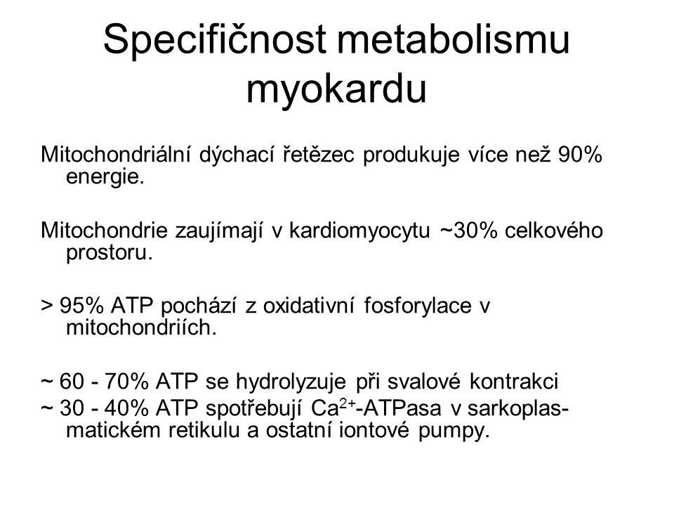 Specifičnost metabolismu myokardu
