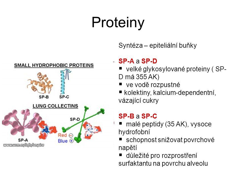 Proteiny Syntéza – epiteliální buňky SP-A a SP-D
