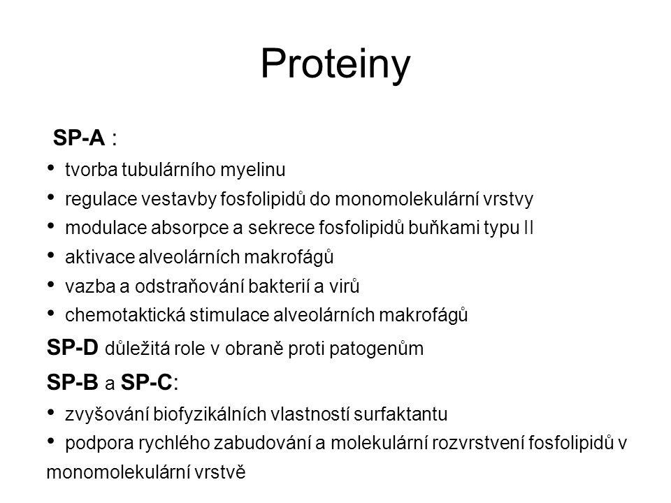 Proteiny SP-A : SP-D důležitá role v obraně proti patogenům
