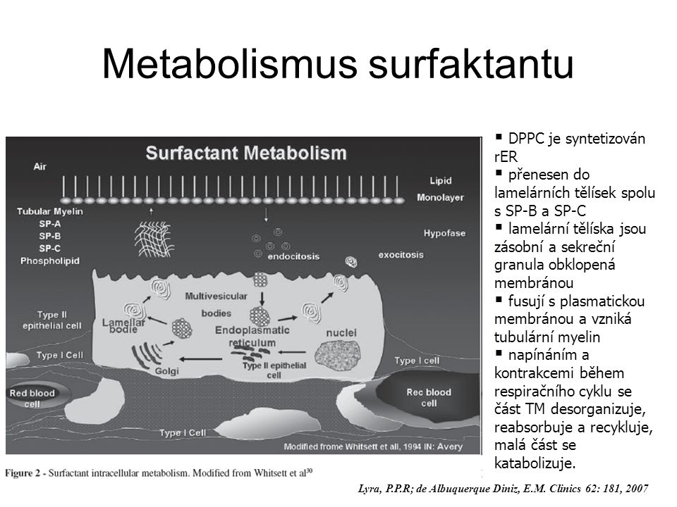 Metabolismus surfaktantu