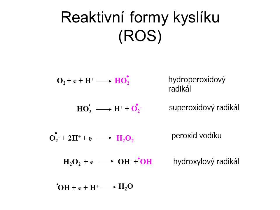 Reaktivní formy kyslíku (ROS)