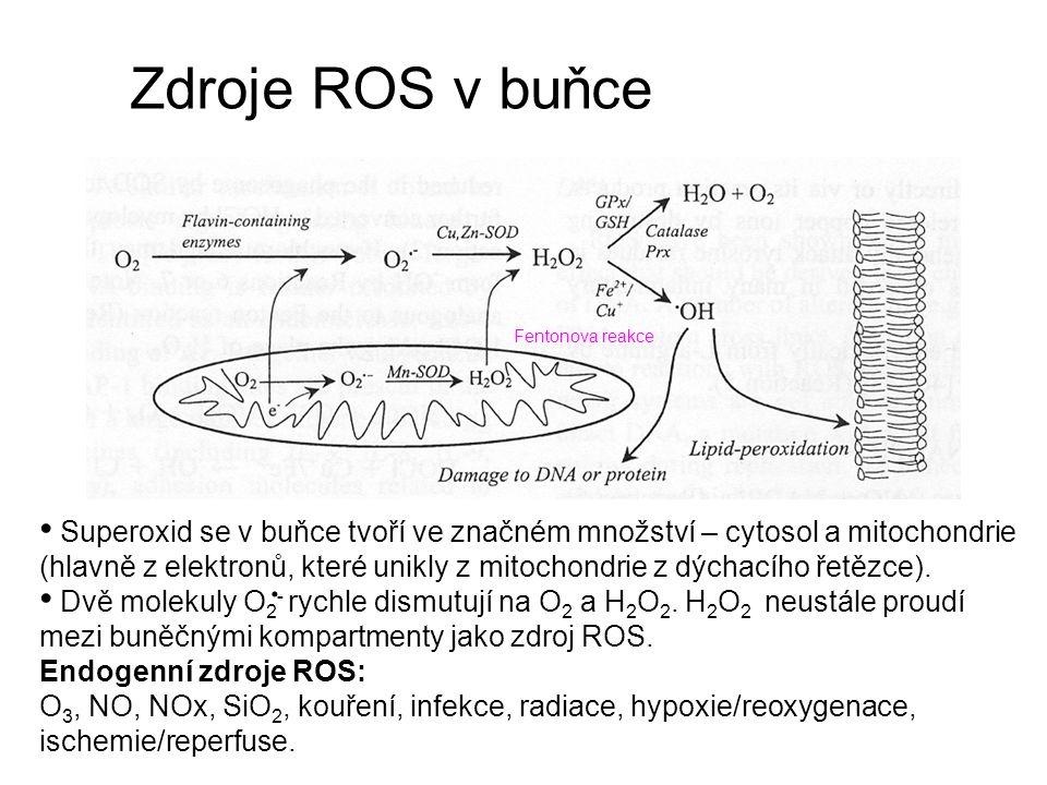 Zdroje ROS v buňce Fentonova reakce.