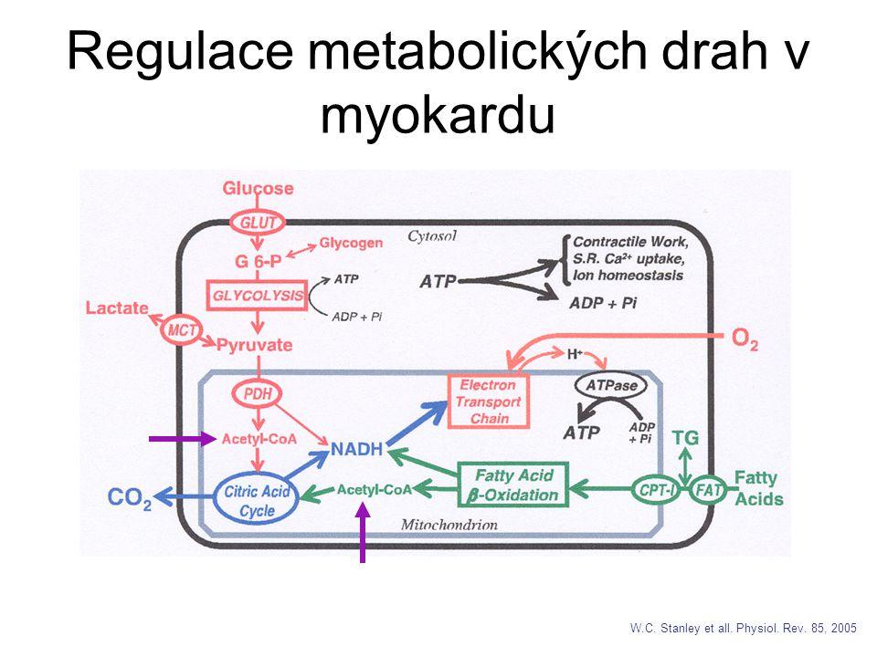 Regulace metabolických drah v myokardu
