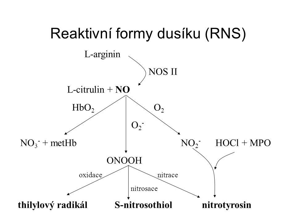 Reaktivní formy dusíku (RNS)