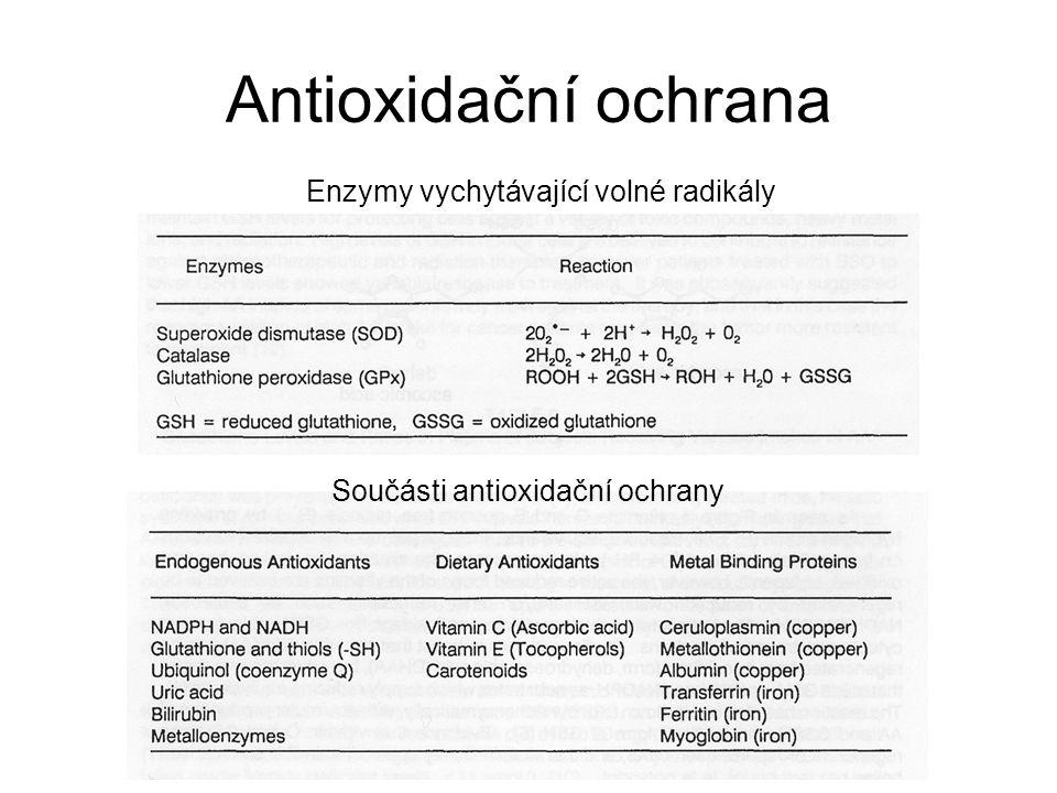 Antioxidační ochrana Enzymy vychytávající volné radikály
