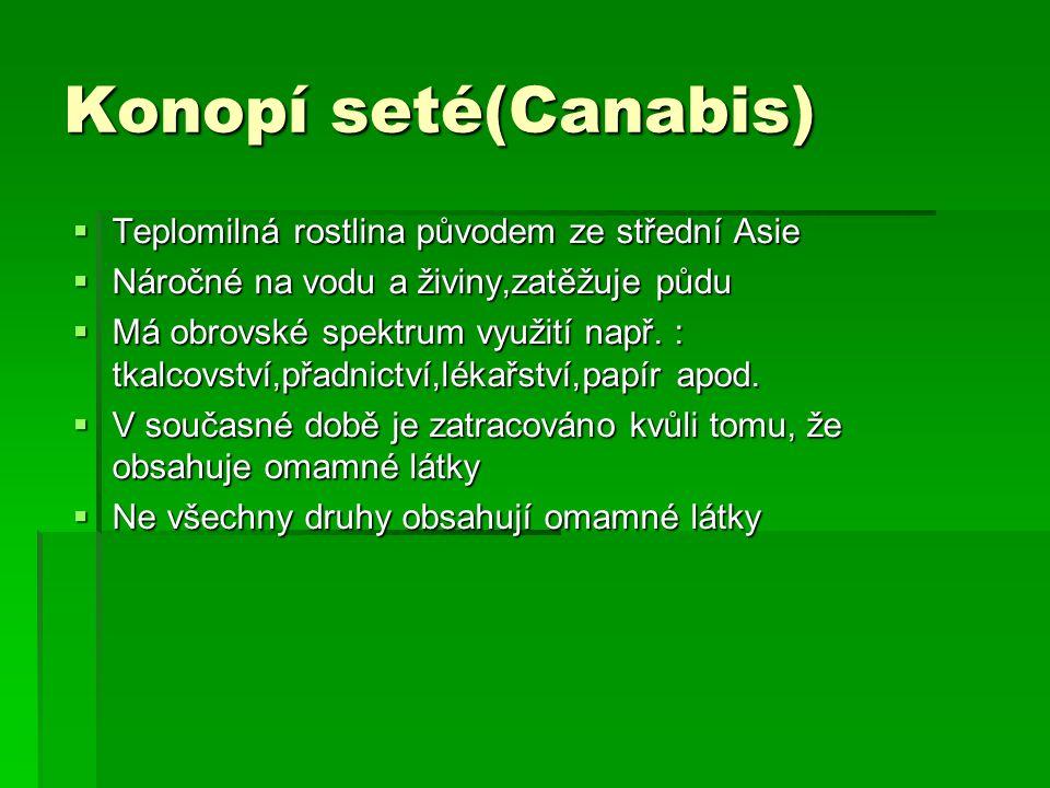 Konopí seté(Canabis) Teplomilná rostlina původem ze střední Asie