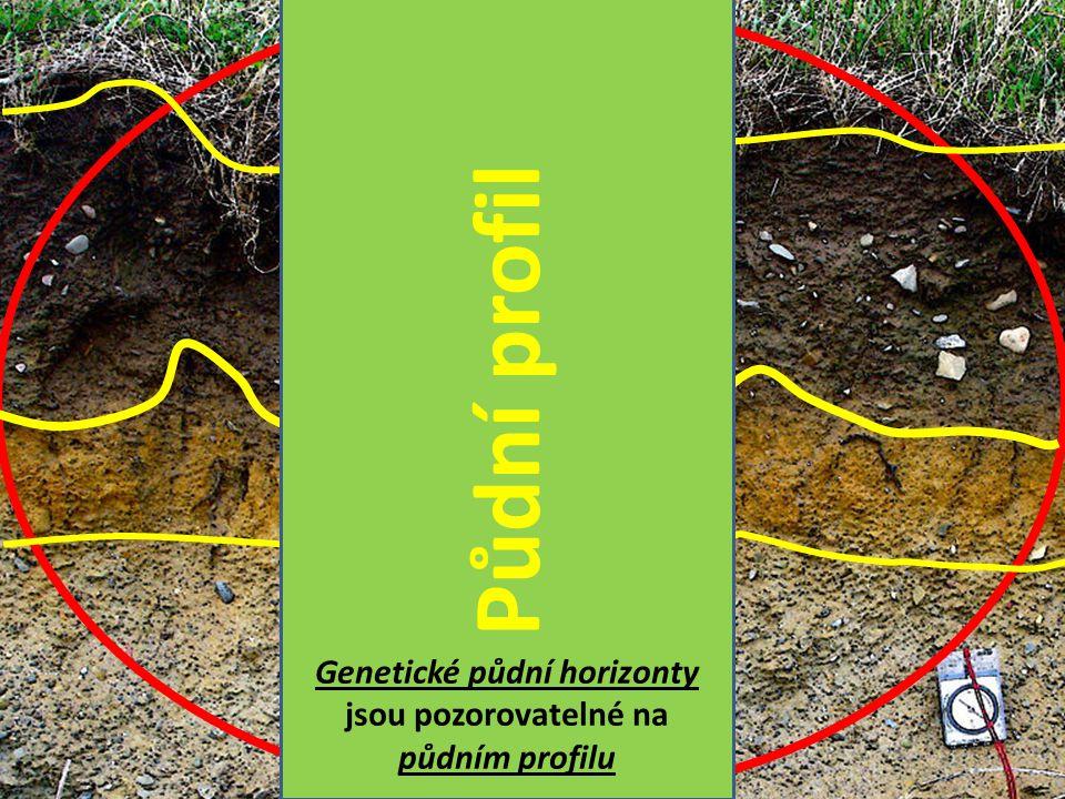 Genetické půdní horizonty jsou pozorovatelné na půdním profilu