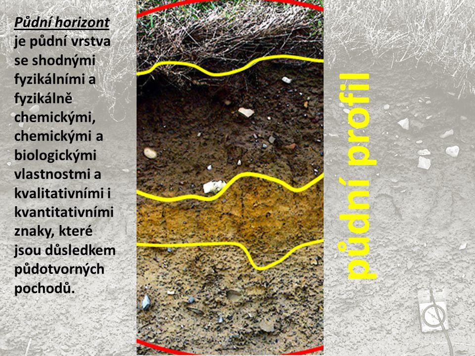 Půdní horizont je půdní vrstva se shodnými fyzikálními a fyzikálně chemickými, chemickými a biologickými vlastnostmi a kvalitativními i kvantitativními znaky, které jsou důsledkem půdotvorných pochodů.