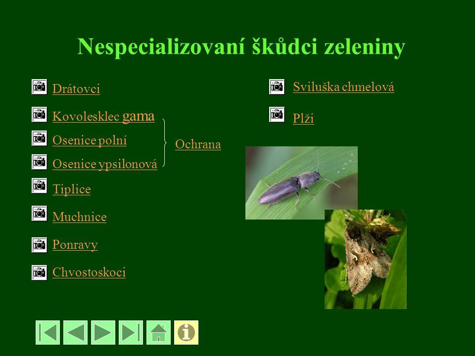 Nespecializovaní škůdci zeleniny