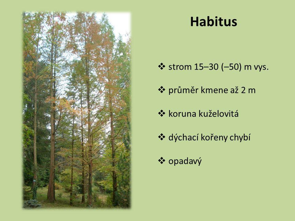 Habitus strom 15–30 (–50) m vys. průměr kmene až 2 m koruna kuželovitá
