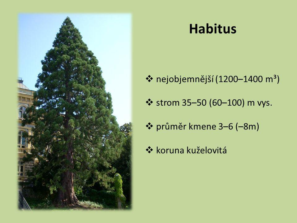 Habitus nejobjemnější (1200–1400 m³) strom 35–50 (60–100) m vys.