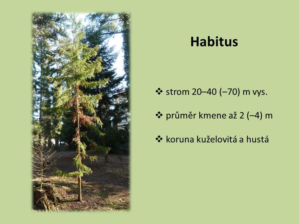 Habitus strom 20–40 (–70) m vys. průměr kmene až 2 (–4) m