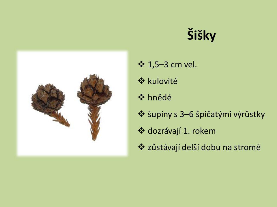 Šišky 1,5–3 cm vel. kulovité hnědé šupiny s 3–6 špičatými výrůstky