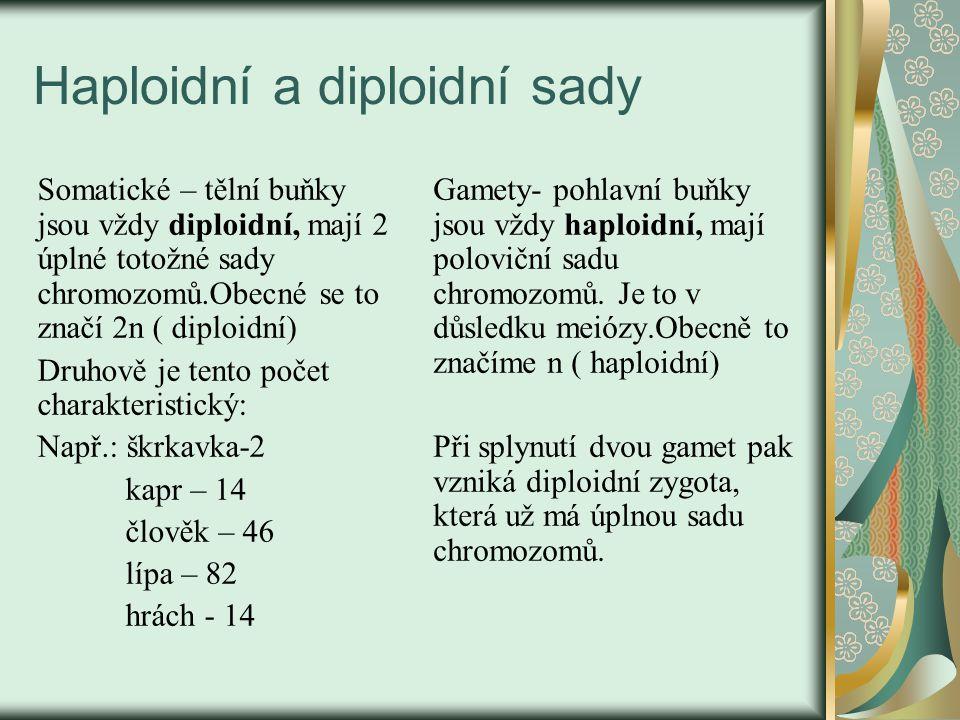 Haploidní a diploidní sady