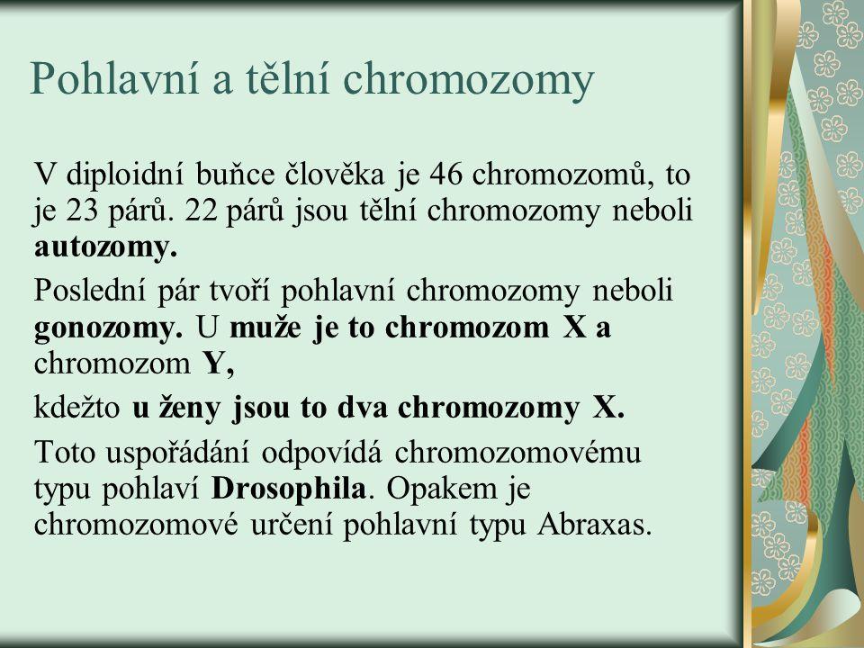 Pohlavní a tělní chromozomy
