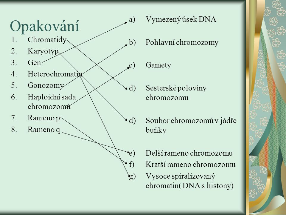 Opakování Vymezený úsek DNA Pohlavní chromozomy Chromatidy Gamety