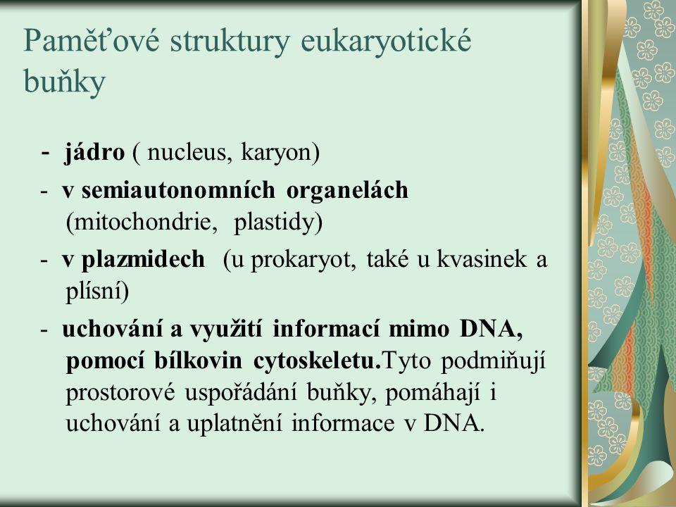 Paměťové struktury eukaryotické buňky