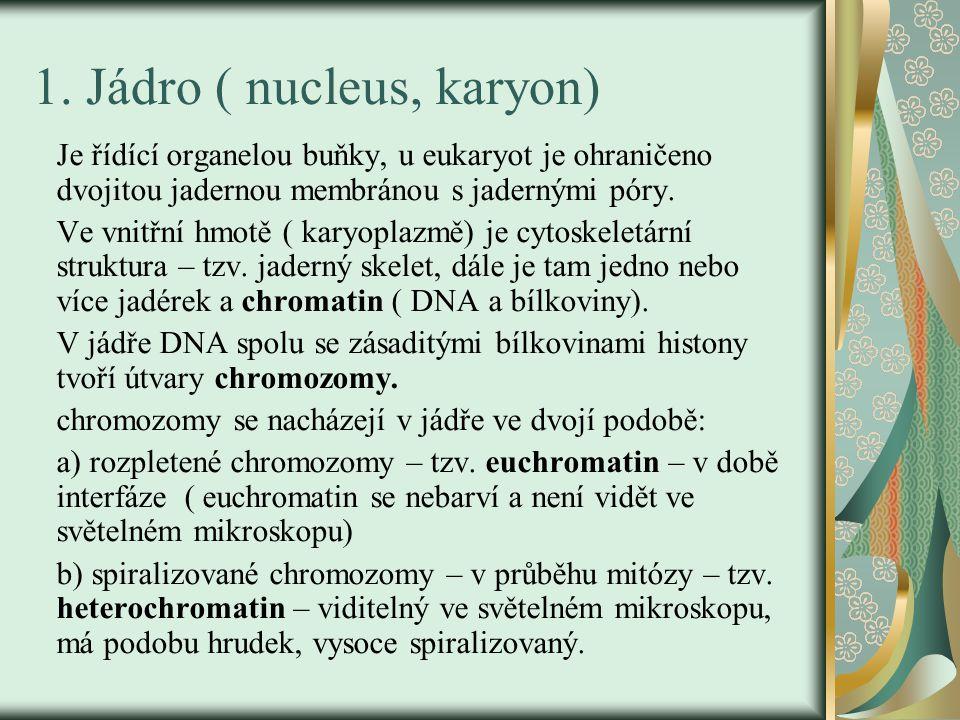 1. Jádro ( nucleus, karyon)