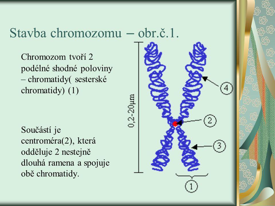 Stavba chromozomu – obr.č.1.