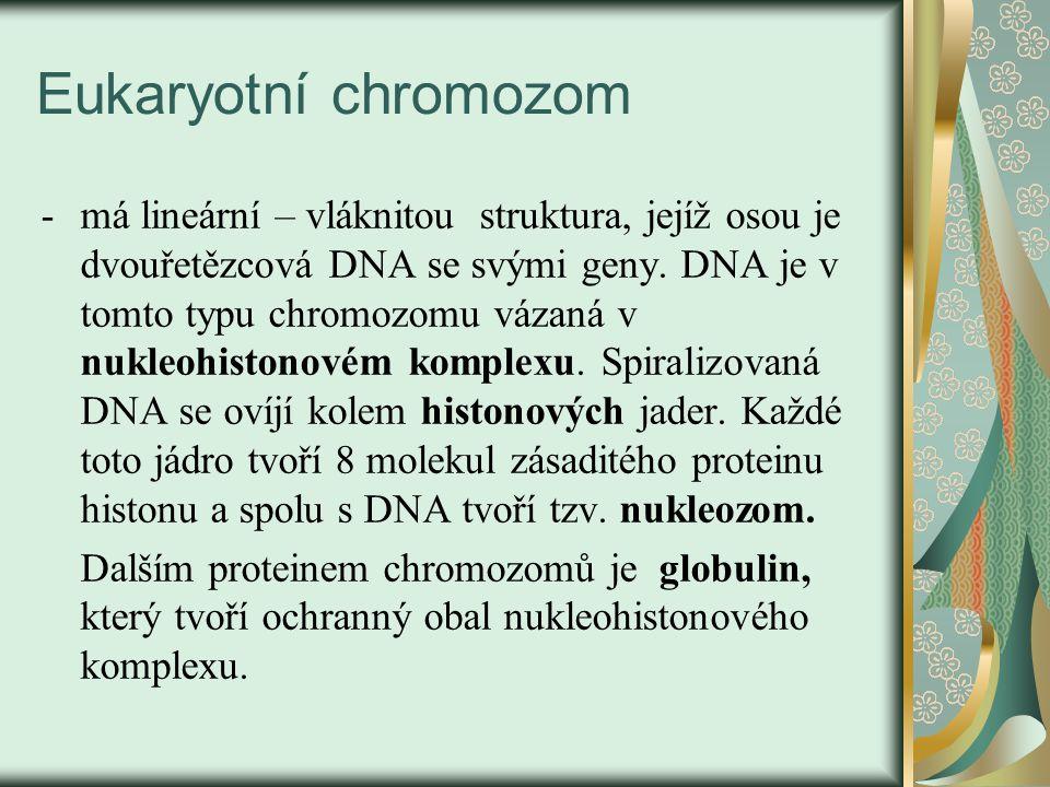 Eukaryotní chromozom