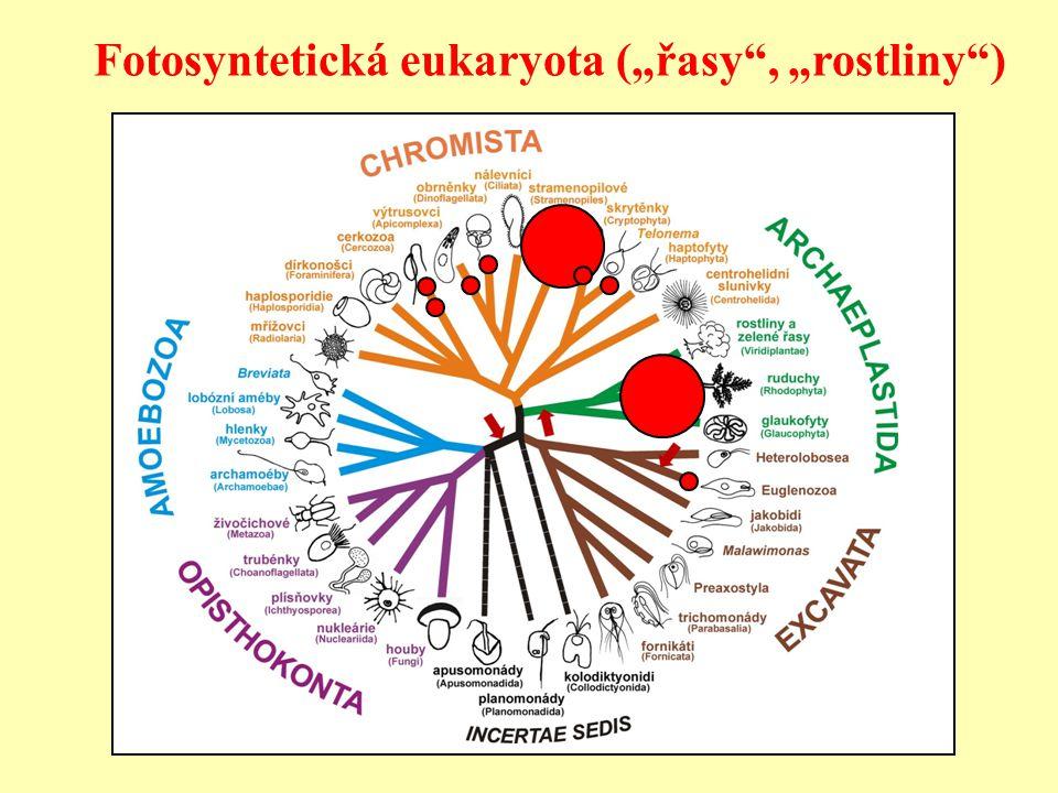 "Fotosyntetická eukaryota (""řasy , ""rostliny )"