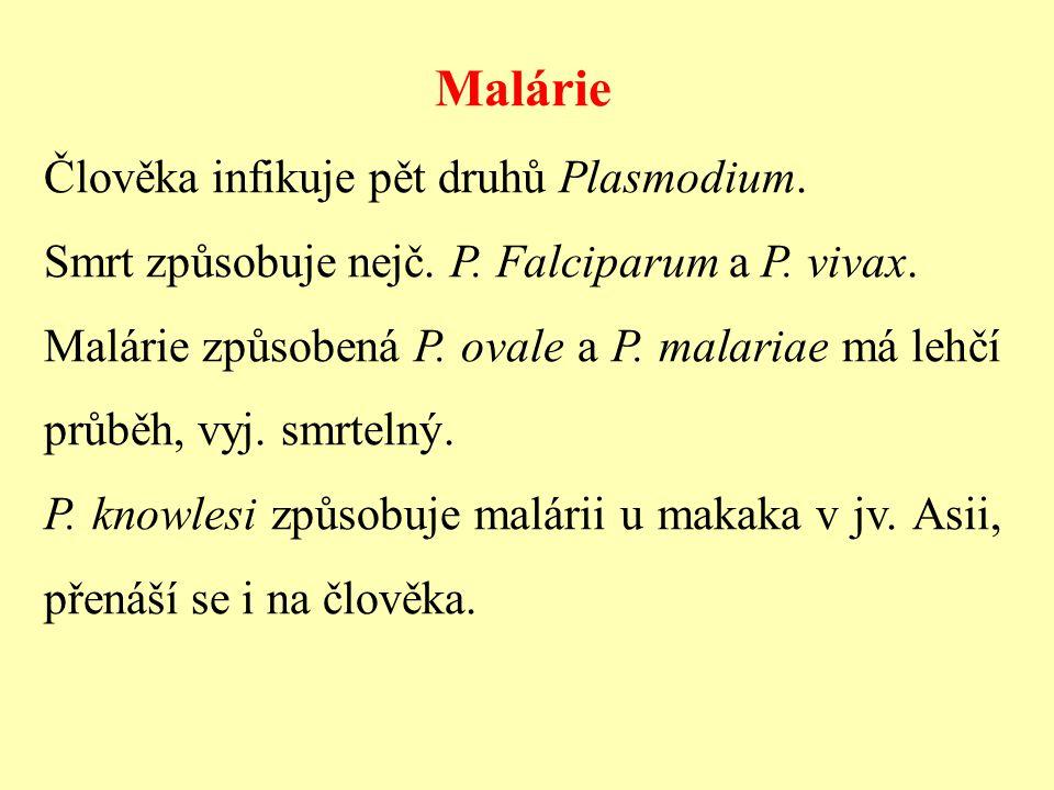 Malárie Člověka infikuje pět druhů Plasmodium.