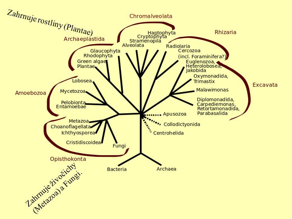 Zahrnuje rostliny (Plantae)
