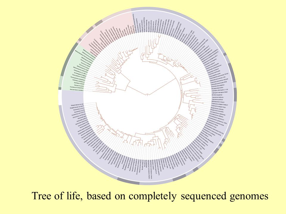 Tree of life, based on completely sequenced genomes