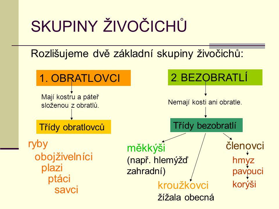SKUPINY ŽIVOČICHŮ Rozlišujeme dvě základní skupiny živočichů: