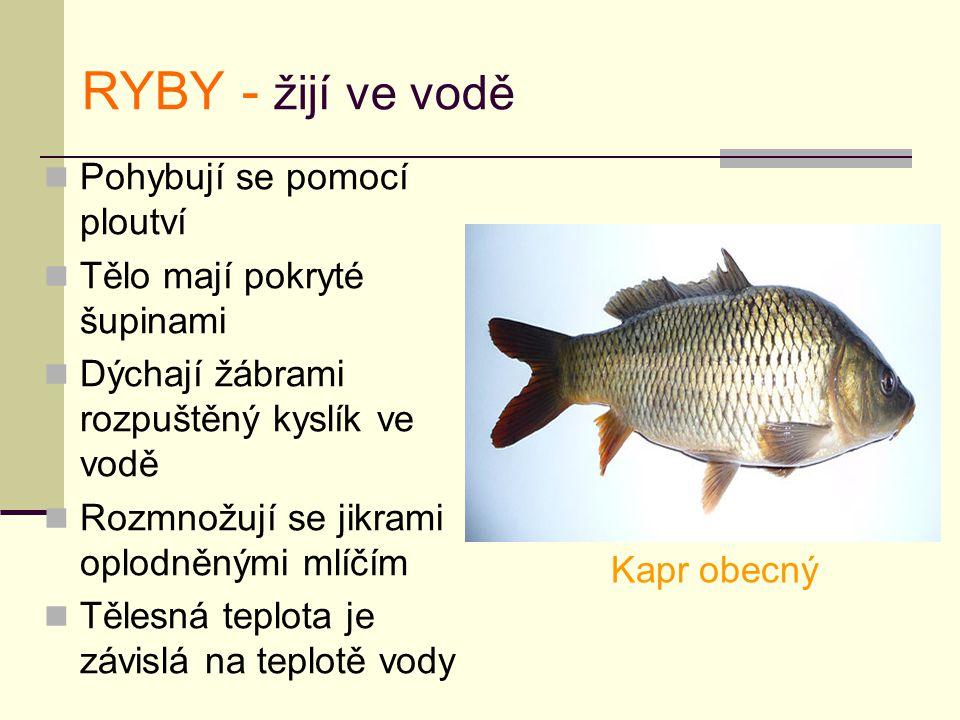 RYBY - žijí ve vodě Pohybují se pomocí ploutví