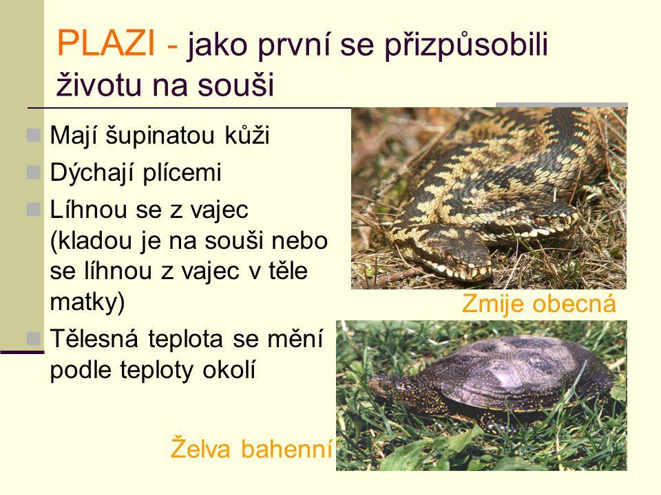 PLAZI - jako první se přizpůsobili životu na souši
