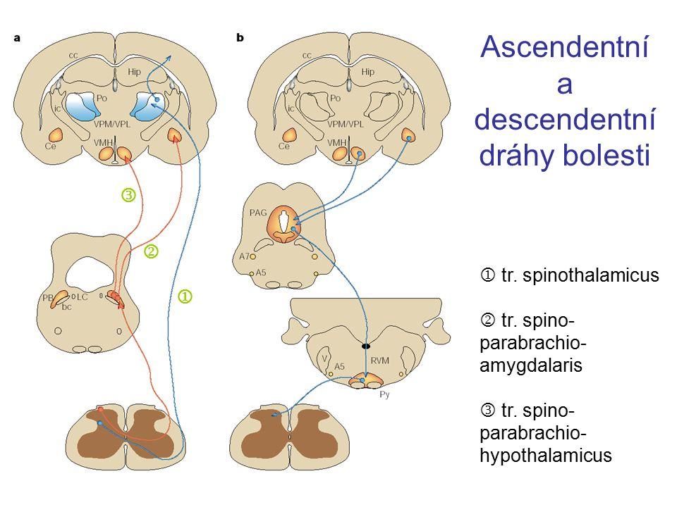 Ascendentní a descendentní dráhy bolesti