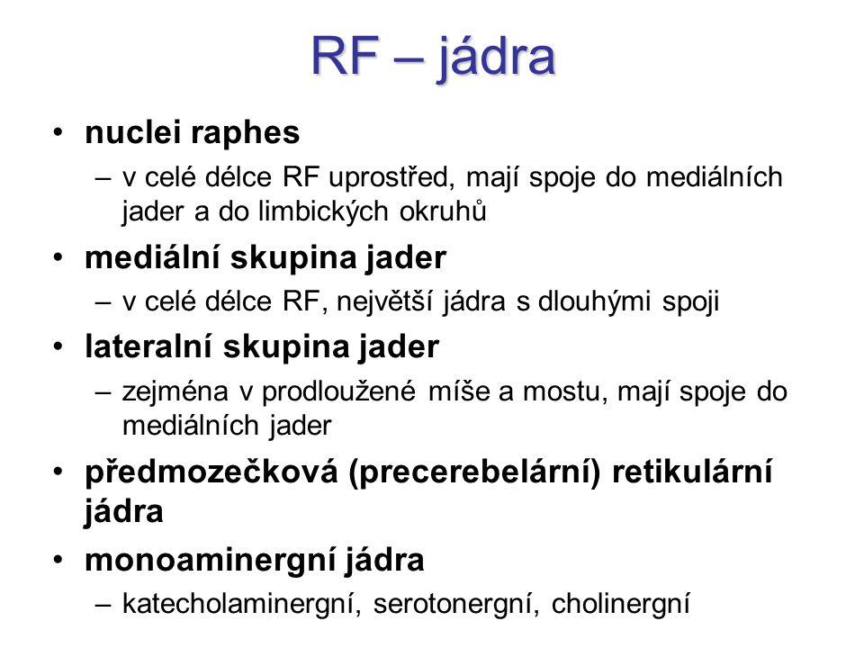RF – jádra nuclei raphes mediální skupina jader