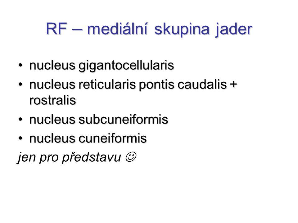 RF – mediální skupina jader