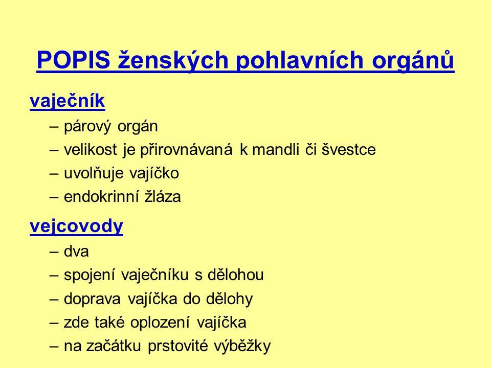 POPIS ženských pohlavních orgánů