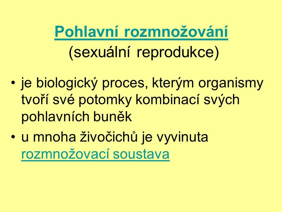 Pohlavní rozmnožování (sexuální reprodukce)