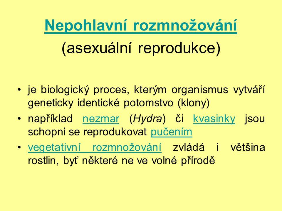 Nepohlavní rozmnožování (asexuální reprodukce)