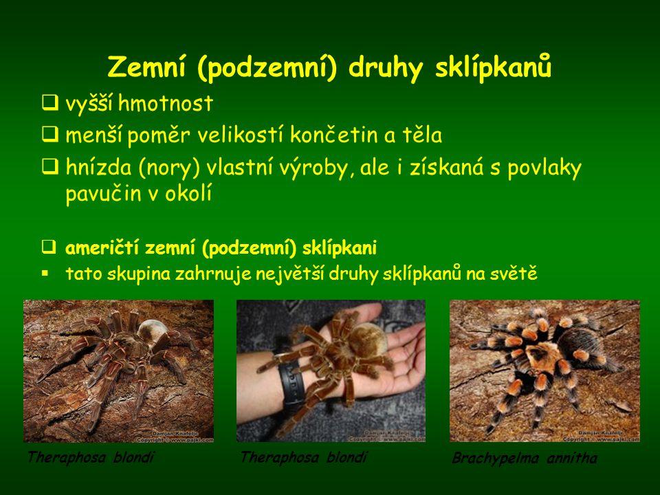 Zemní (podzemní) druhy sklípkanů