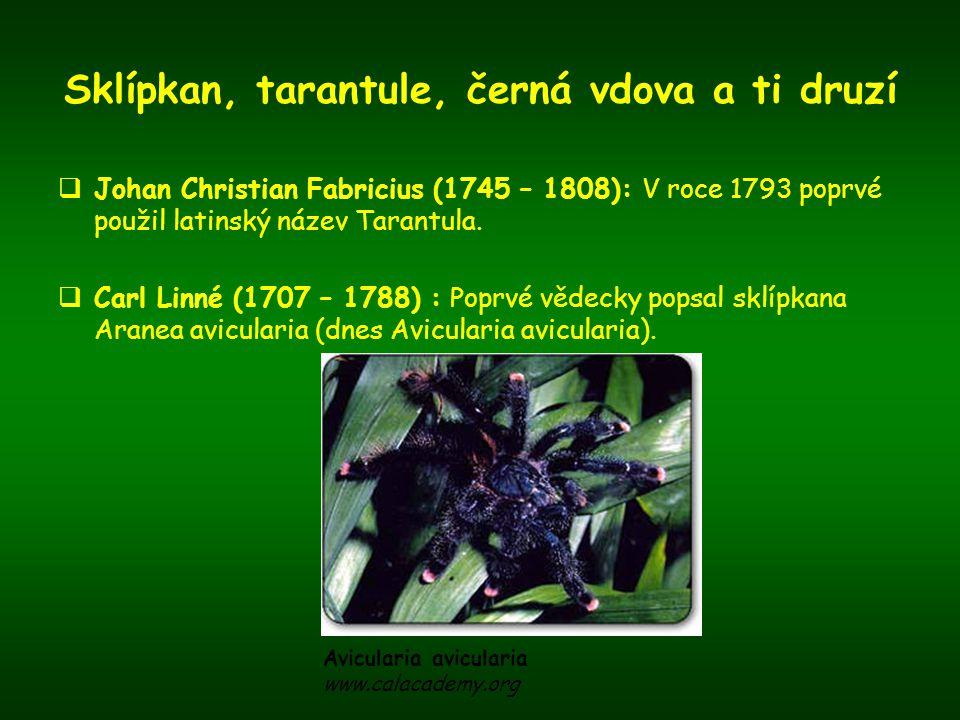 Sklípkan, tarantule, černá vdova a ti druzí